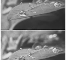 Drops Collage by tropicalsamuelv