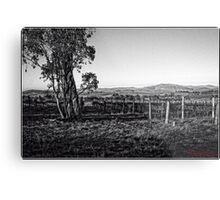Vineyard behind Holt in Canberra Metal Print