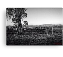 Vineyard behind Holt in Canberra Canvas Print