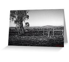 Vineyard behind Holt in Canberra Greeting Card