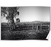 Vineyard behind Holt in Canberra Poster