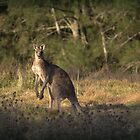 Kangaroo by Deborah McGrath