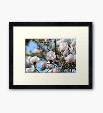 Spring of Blooming  Framed Print