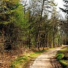 Strolling through the early spring forest by jchanders