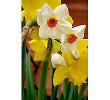 A Daffy Day Photographic Print