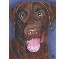 Chocolate Labrador Retriever 'Bright Eyes' Photographic Print