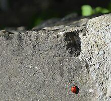 Ladybug by ak4e