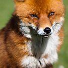 Smart like a Fox by Mark Lyons