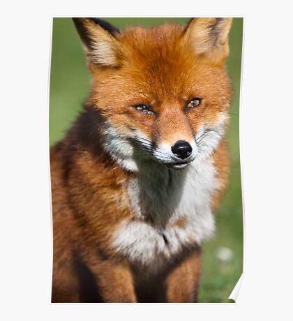 Smart like a Fox Poster