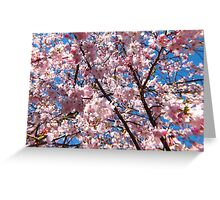 Lovely Cherry Blossoms  Greeting Card