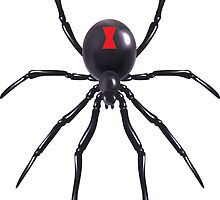 Black Widow Spider by Smaragdas