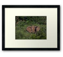 Deep in the  Bush African Elephant – Loxodonta africana Framed Print
