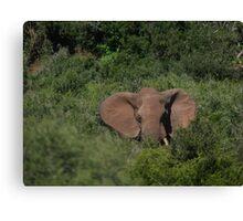 Deep in the  Bush African Elephant – Loxodonta africana Canvas Print
