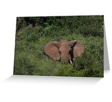 Deep in the  Bush African Elephant – Loxodonta africana Greeting Card