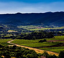 Vineyard landscape in summer by Gaylord