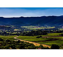 Vineyard landscape in summer Photographic Print