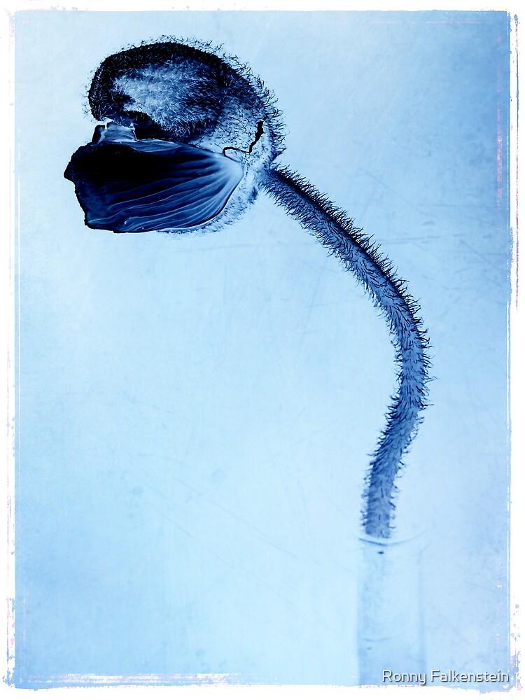 Poppy 2 - blue by Ronny Falkenstein