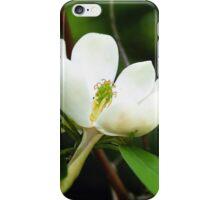 Swamp Magnolia iPhone Case/Skin