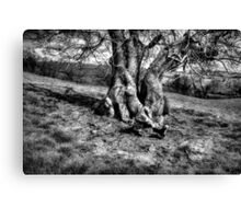 A Tree in a Pool of black and white Light Canvas Print