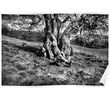 A Tree in a Pool of black and white Light Poster