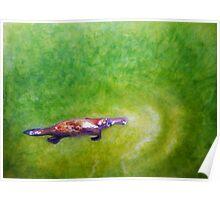 """Afloat"" - Platypus (Ornithorhynchus anatinus). Poster"