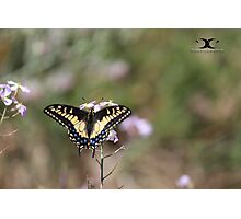 Random butterfly Photographic Print