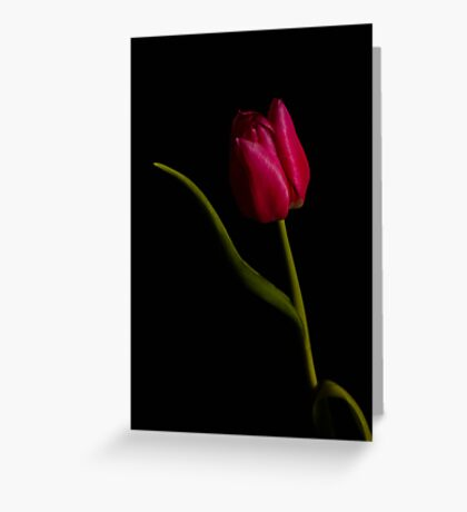 tulip red green black Greeting Card
