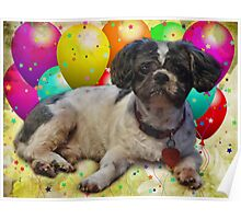 Happy Birthday Kato! Poster