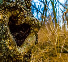 Love in Nature by Jarrod Lister