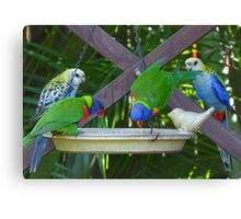 My Very Colouful Feathered Friends Canvas Print