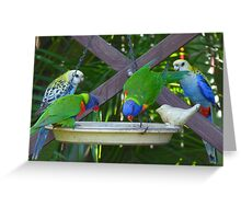 My Very Colouful Feathered Friends Greeting Card