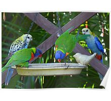 My Very Colouful Feathered Friends Poster
