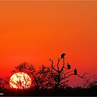AT SUNSET IN KRUGER - SONSONDERGANG IN KRUGER PARK by Magaret Meintjes