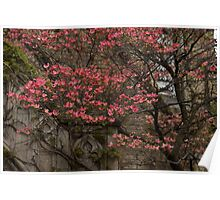 Pink Spring - Dogwood Filigree and Lace Poster