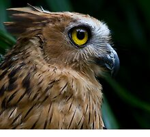 Fish Owl by byronbackyard
