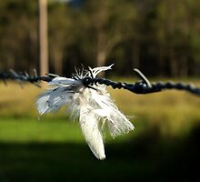Feather On Barb by Mark Batten-O'Donohoe