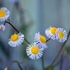 Wild Flowers by dez7