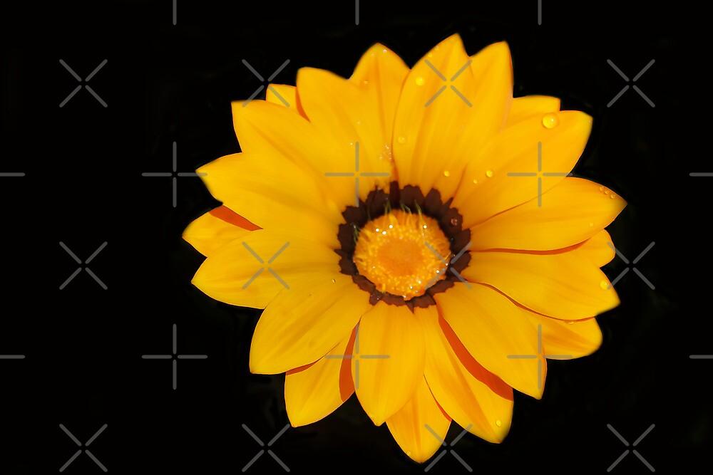 Golden Blossom by Heather Friedman
