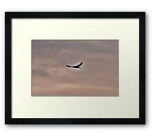 Raven Guide Framed Print