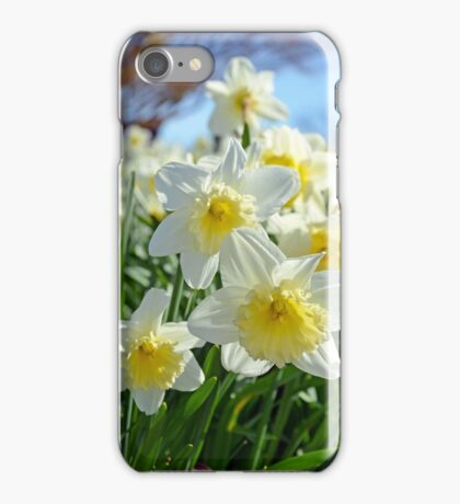 White and yellow spring daffodils iPhone Case/Skin