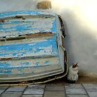 cat and boat by habish