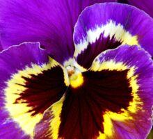 Purple pansy flowers Sticker