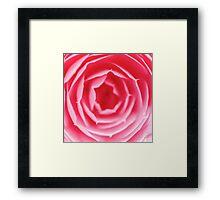 Pink Rose Macro Framed Print