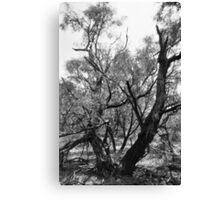 Texas Tree Canvas Print