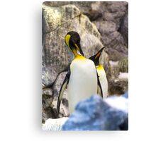 Preening King penguin (Aptenodytes patagonicus) Canvas Print
