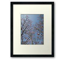 March Blossom (2014)  Framed Print