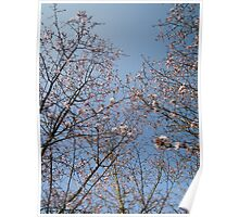 March Blossom (2014)  Poster