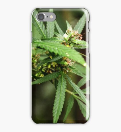 Cannabis II iPhone Case/Skin