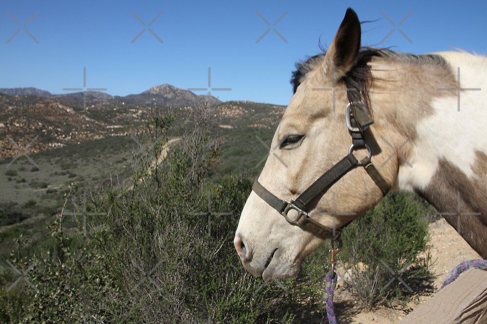Buster Brown at Sycamore Canyon by heatherfriedman
