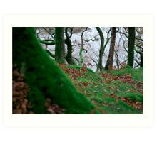 Forest in Keswick Art Print